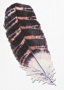 Brown and Black Feather